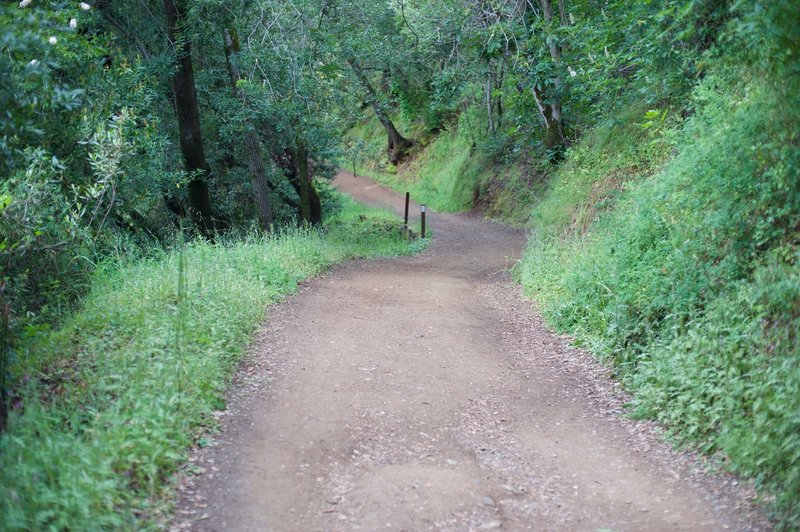 The trail as it makes its way back downhill.