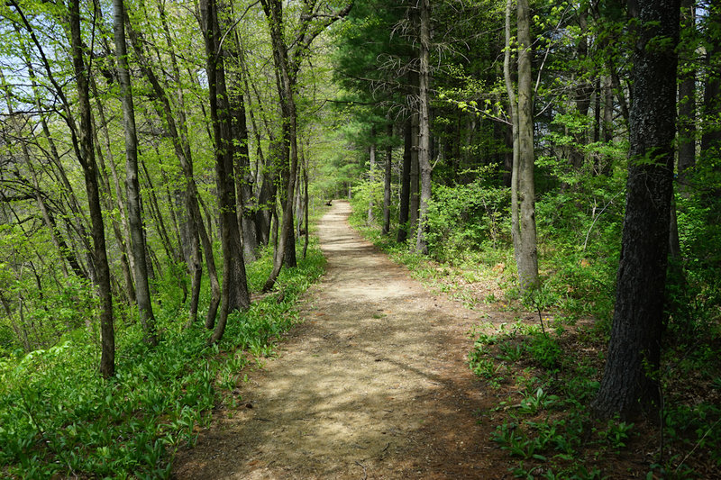 Walk along the river bluff. Sharp drop off the trail to the left. Watch the kids and pets.
