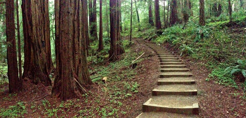 Muir Woods Canopy View Trail