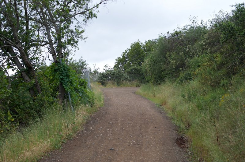 The Novitiate Trail climbs from the Jones Trail higher into the preserve and provides access to the other trails.