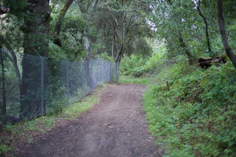 Novitiate Trail as it moves through the woods. Rabbits and quail can be seen scurrying along the trail in this section.