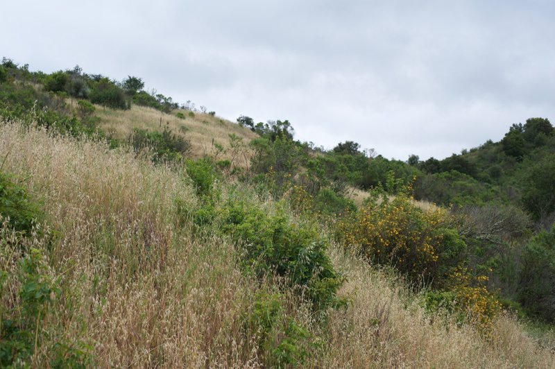 Looking back up the hillside. Flowering plants can be seen in the spring.