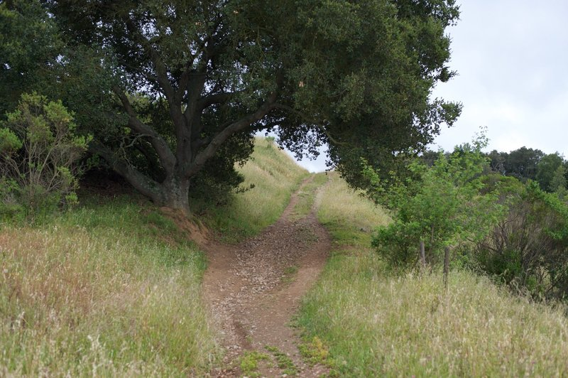 The Lower Brothers Bypass Trail as it ascends from the Novitiate Trail.