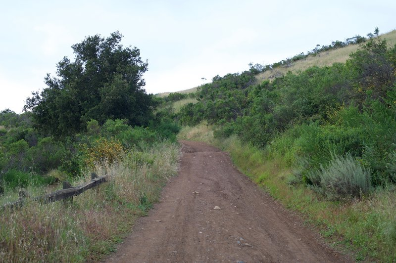 The Manzanita Trail where it meets the Lower Brothers Bypass Trail.