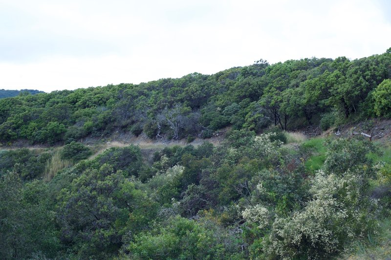 The trail as it makes its way along the hillside.