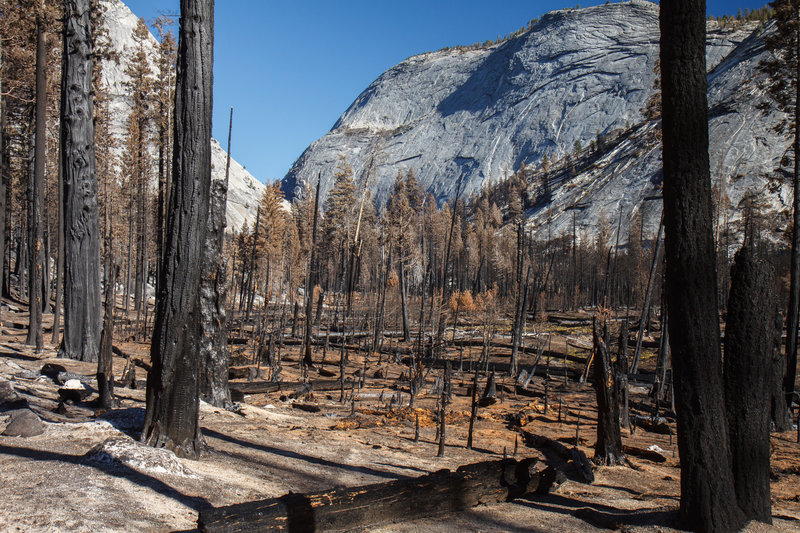 Burnt forest on the way to Merced Lake, Yosemite.