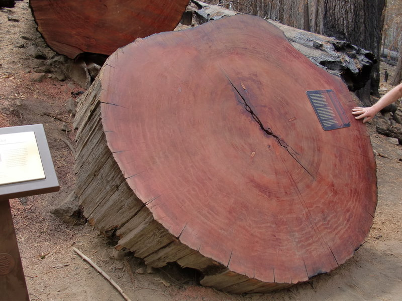 Learn about tree rings and how old these trees are.