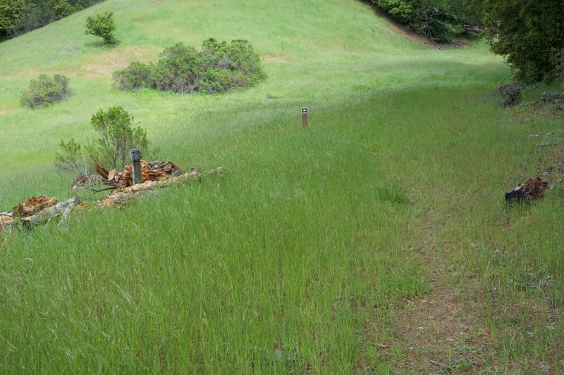 The trail cuts to the right and makes its way through the fields on little more than a lightly maintained trail.