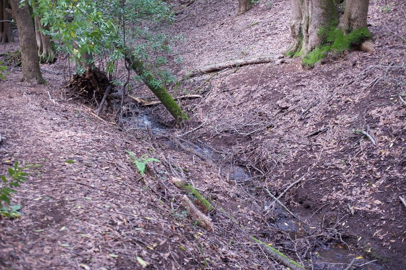 The trail enters the woods and follows a small, seasonal creek bed.