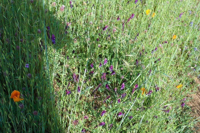 In the spring, wildflowers grow in the fields that the trail traverses.