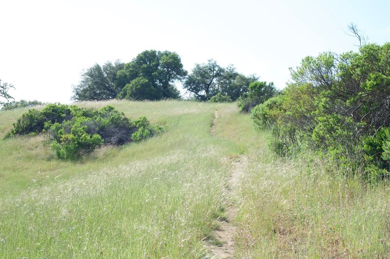 The trail makes its way uphill as it moves toward Foothills Park.