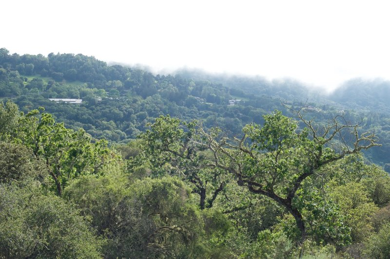 The hills and trees surrounding the preserve.