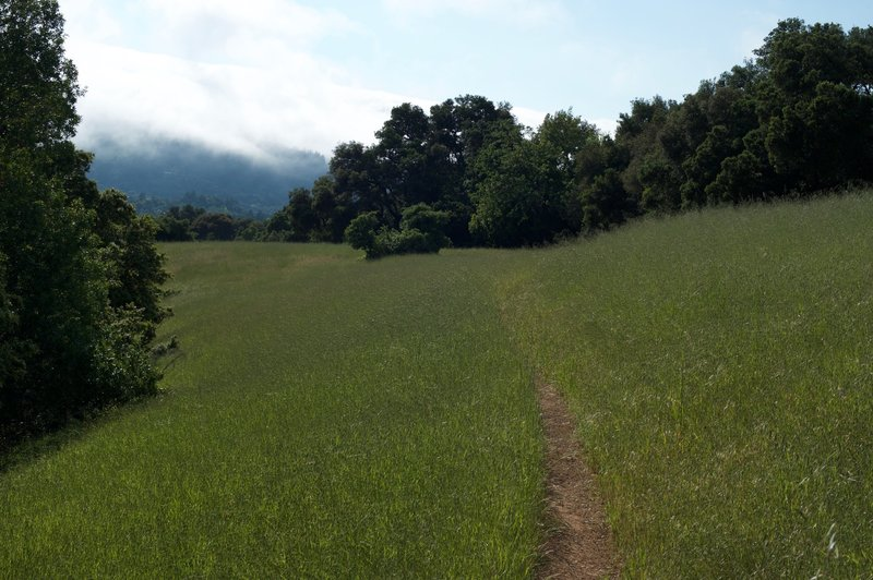 The trail makes its way through the fields along a narrow dirt track.