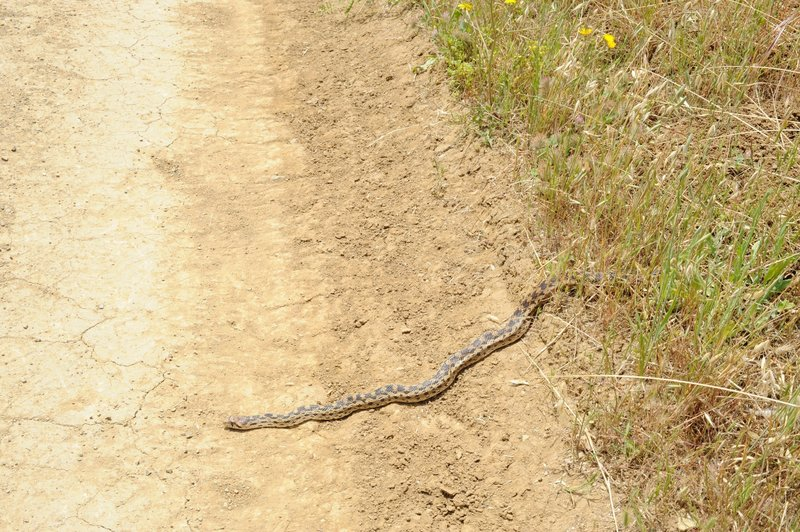 In the warmer months, snakes can be seen crossing the trails of the preserve. Keep an eye on the trail!