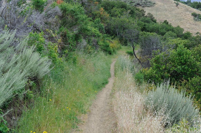 The trail is a narrow dirt track as it descends along the hillside.