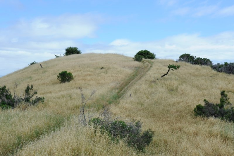The trail climbs up a small hill as it makes its way out to the knoll.