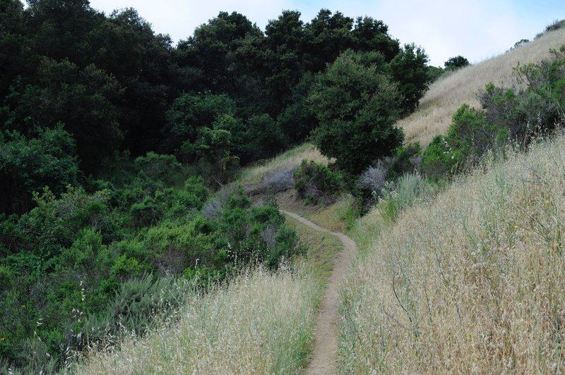 Hugging the hillside, the trail meanders along.
