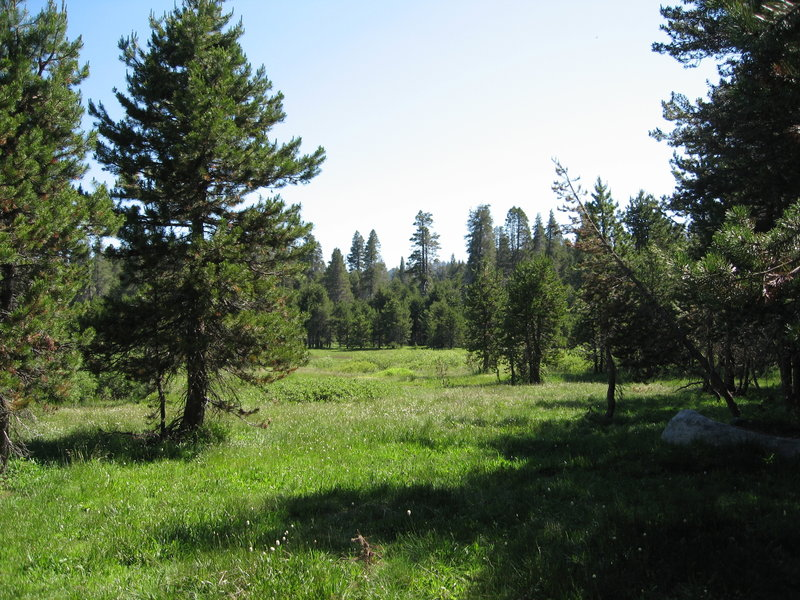 Typical meadow in Yosemite.