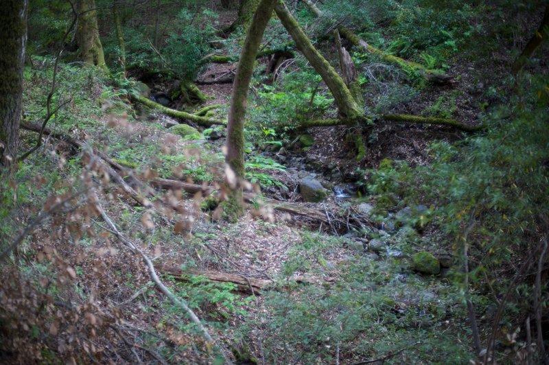 The creek as it runs through the preserve.