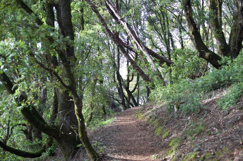 The trail as it meanders through the woods.