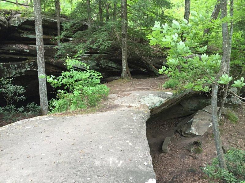 Atop the narrow natural bridge at Pickett State Park.