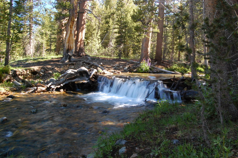 Dana Fork stream crossing.
