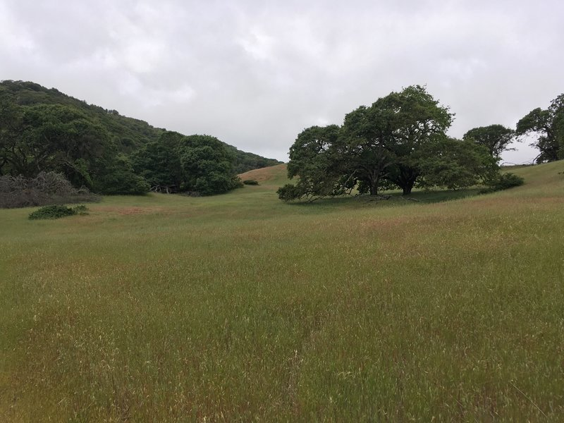 The main field of Hayfields Trail.
