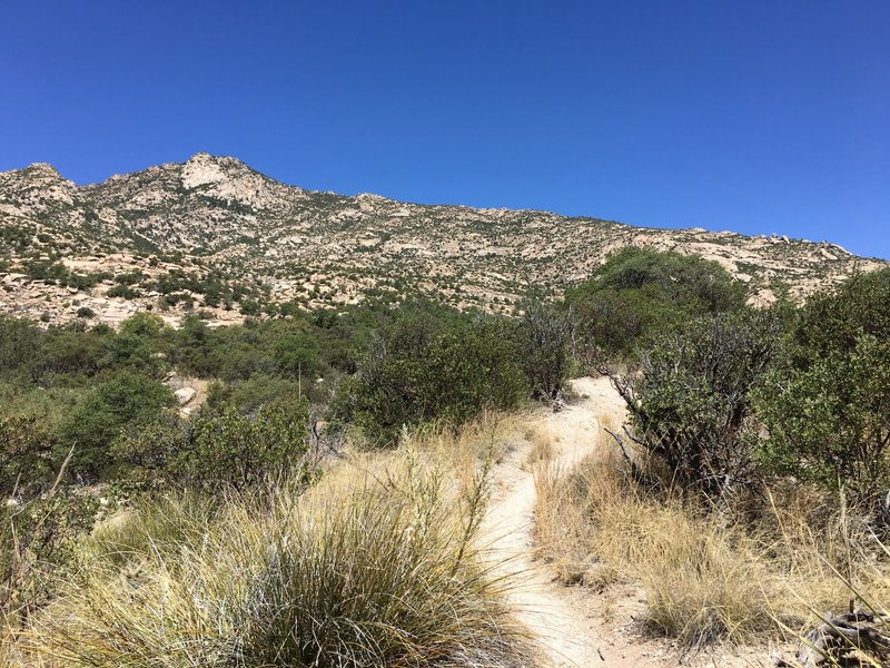 As you climb away from Miller Creek, the trail winds up a boulder field.