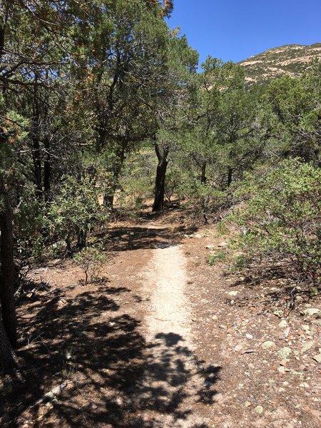 View looking west along Heartbreak Ridge Trail