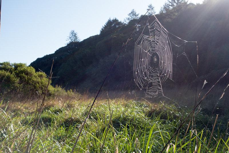 Morning spider web.