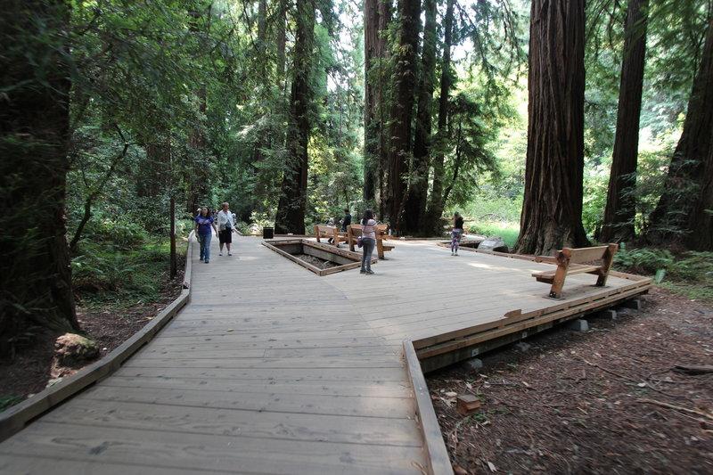 The boardwalks in Muir Woods.