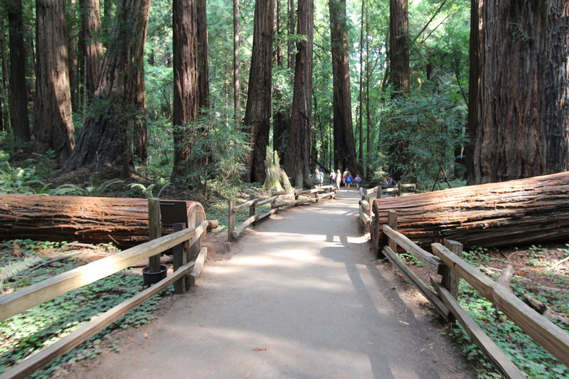 The path into Muir Woods.