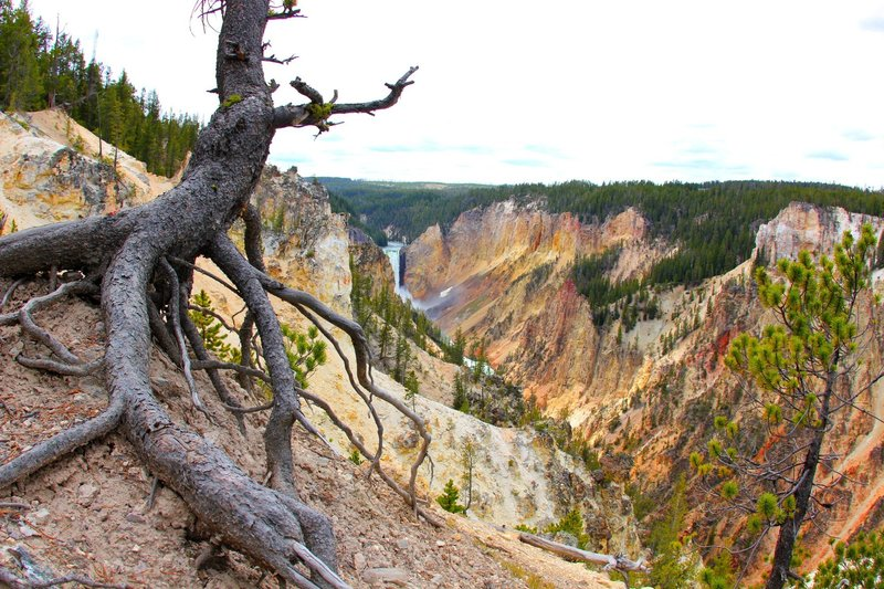 The colors of Yellowstone's Grand Canyon.