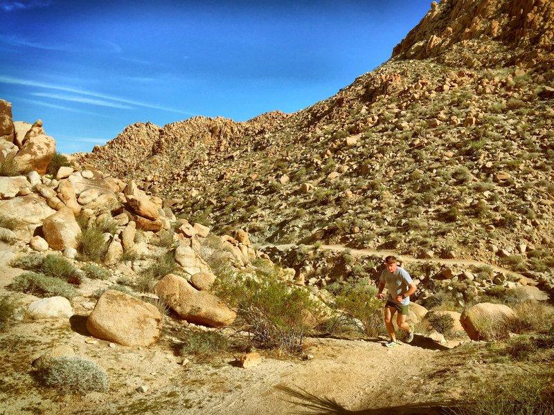 Starting the climb through Boy Scout Trail.