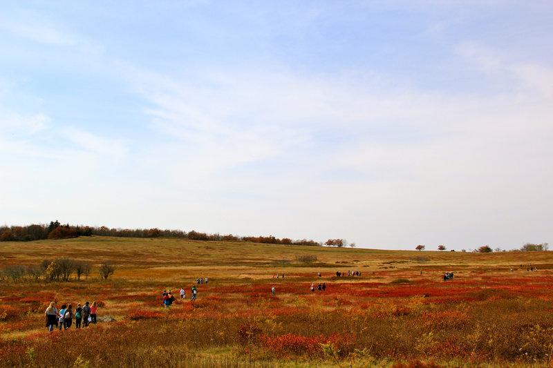 Visitors walking through Big Meadows in autumn.