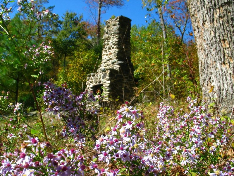 Remnant of an old building at Rapidan Camp. with permission from rootboy