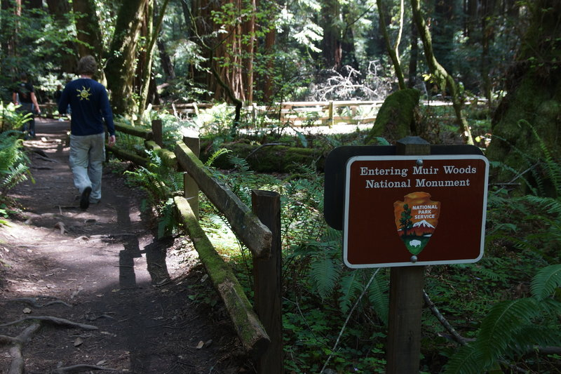 Entering Muir Woods from the Bootjack Trail