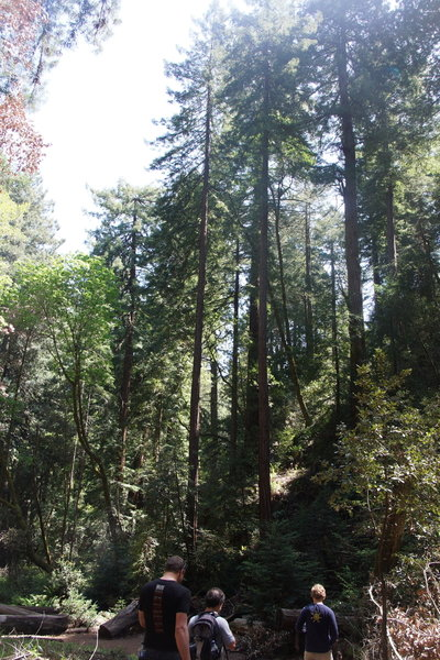 Starting the ascent of Bootjack Trail