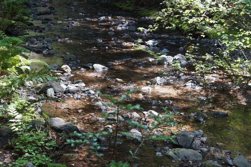 Burbling Redwood Creek