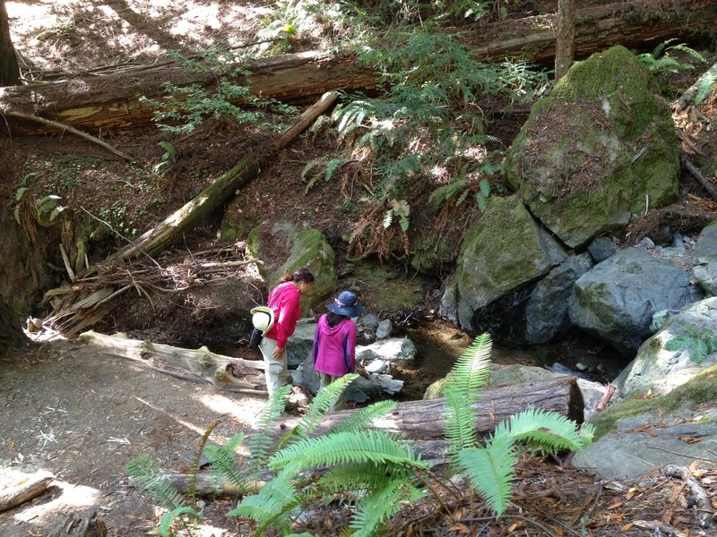 Investigating a section of Redwood Creek