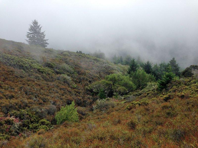 Mount Tamalpais-  Matt Davis Trail fog