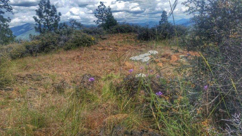Top of Bolt Mountain