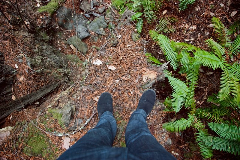 My feet and lots of ferns on this trail.