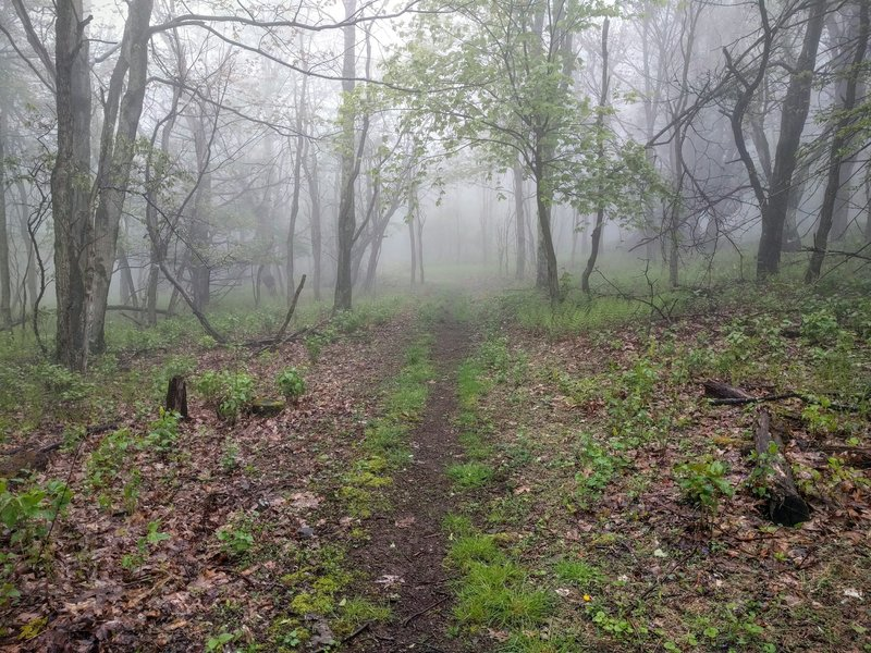 A section of the Tanners Ridge Horse Connector Trail which connects to the Skyland-Big Meadows Horse Trail.