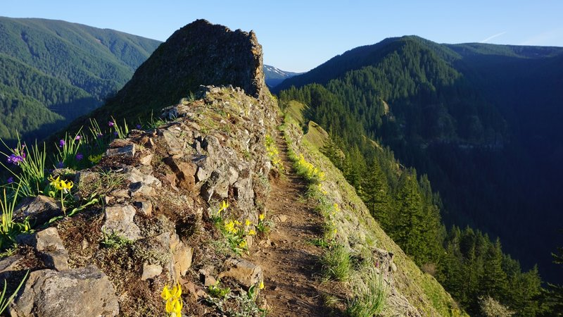 South-facing spine of a ridge line near the peak of Munra Point.