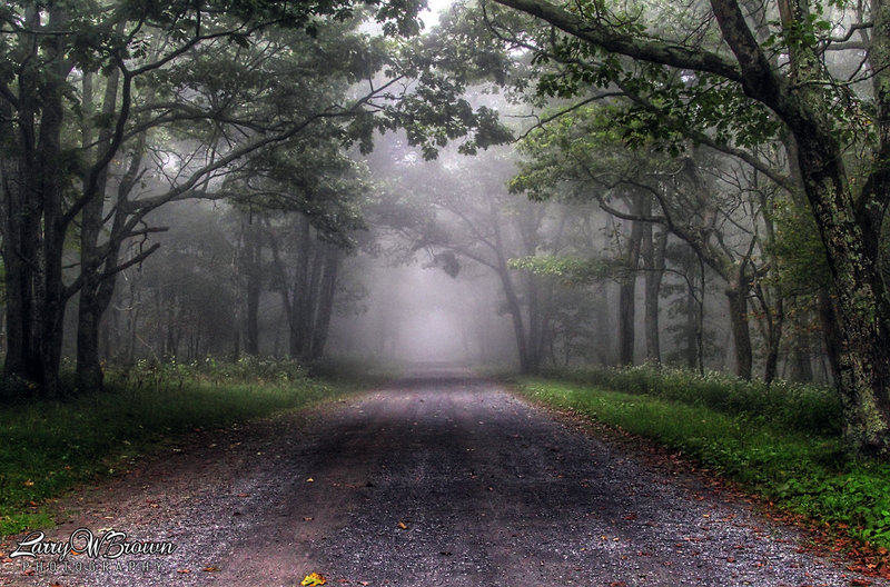 A section of the Rapidan Road on a foggy Summer morning.