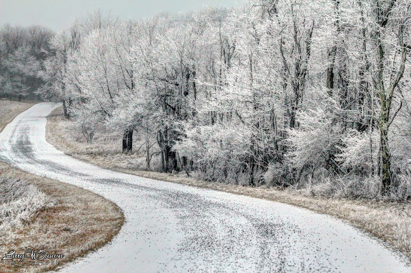 Rime Ice along the Rapidan Road.