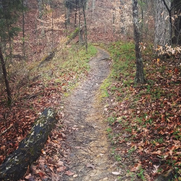 Part of the second downhill section of the Red Trail.