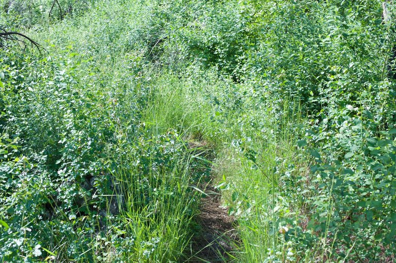 The trail can be overgrown in the spring time, so make sure you are paying attention to where you are going.