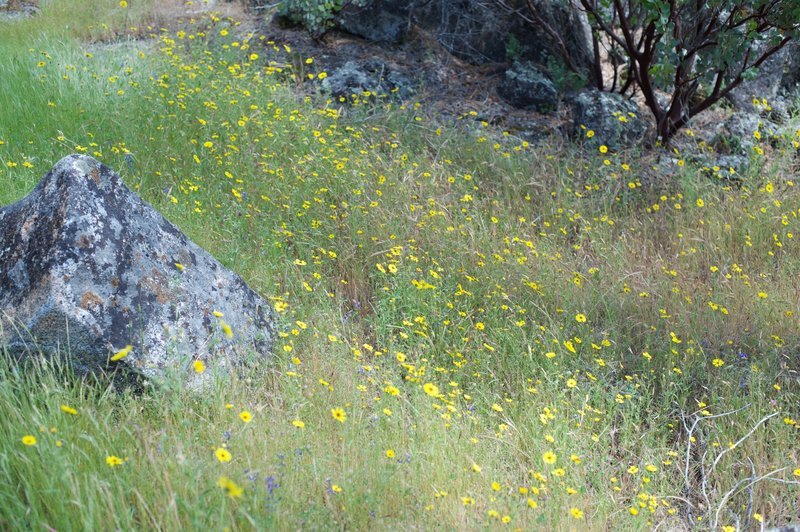 Wildflowers bloom along the trail.